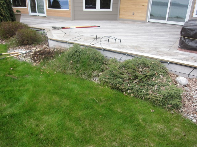 our 10 yr old landscape before