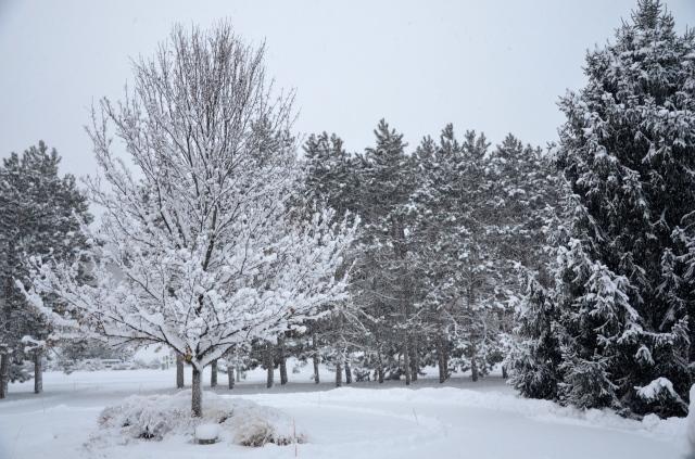 Snowday @ Sewfrench